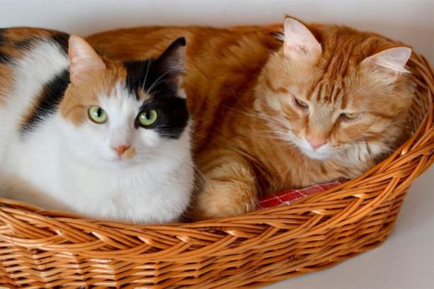 Ljubimac Evo zašto mačke rade ovih pet čudnih stvari! bad86c10b53