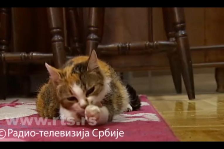 Veliki stari video maca
