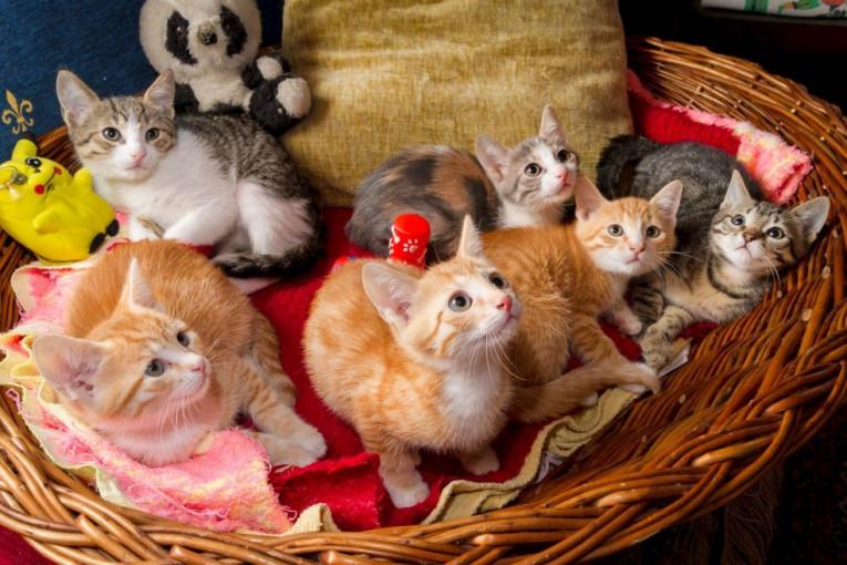 Velike fotografije maca