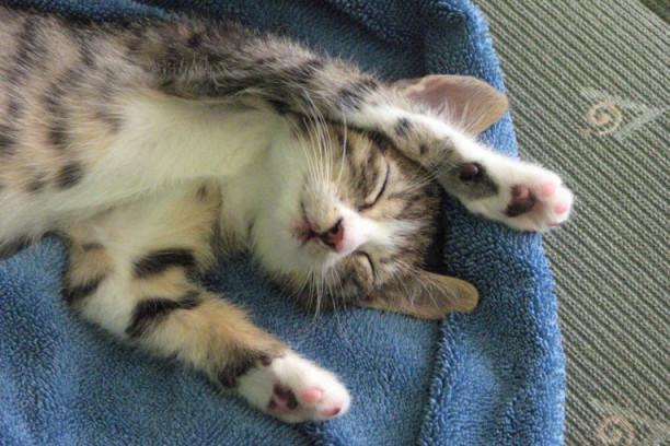 Republika   (VIDEO) Imate mačku koja je kradljivac  NISTE JEDINI! d0c19e376ac