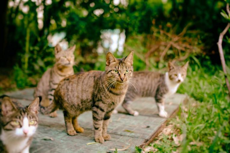 Veliki maca foto com